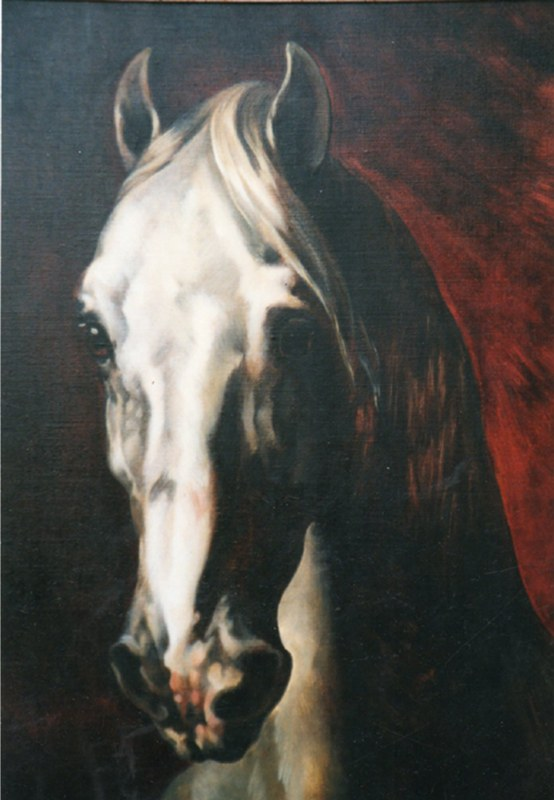 cheval-copie-800x600